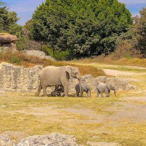 ¿Quién fue Amy Camacho, directora del zoológico Africam Safari?