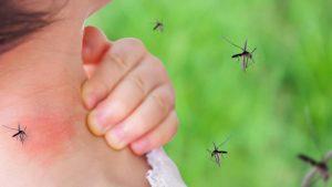 Repuntan casos de dengue en Tamaulipas