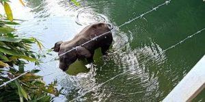 Elefanta preñada muere al comer una piña con explosivos