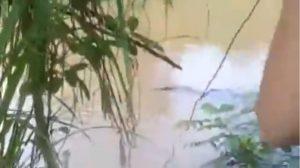 VIDEO: sujetos lanzan a perrita al agua para ser devorada por cocodrilos