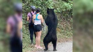 Deportistas viven terror en Chipinque al toparse con oso VIDEO