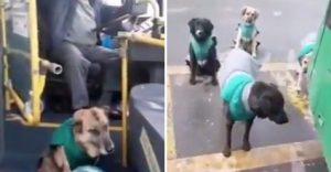VIDEO: Empresa de transporte contrata a perros callejeros como parte del staff