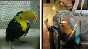 Patrulla Fronteriza decomisa ave exótica en Brownsville Texas