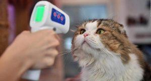 Primer caso de coronavirus en un gato Reino Unido