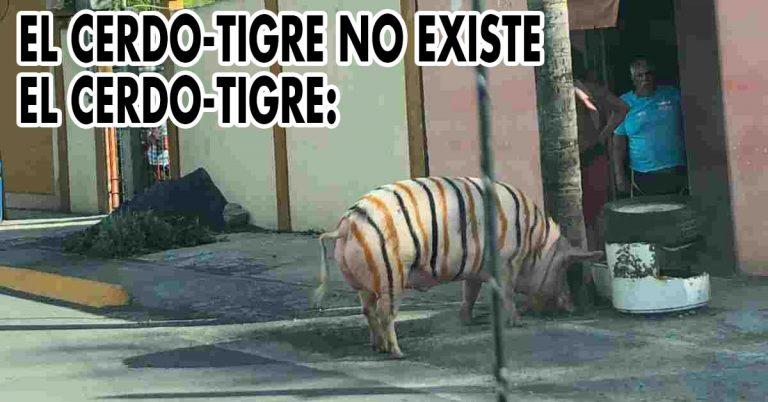 cerdo-tigre linares nuevo leon video viral