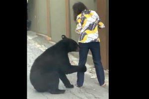 Reaparece oso 'amistoso' en San Pedro (VIDEO)