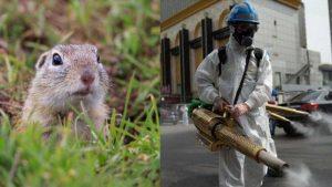 ¿Por qué la 'peste bubónica' no representa amenaza?; OMS responde