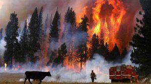 Incendios forestales de California se duplican; huyen miles