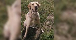 Olvidan en patrulla a perro que detectaba explosivos; muere deshidratado