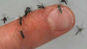 Dengue en Nuevo Laredo; ¿Qué es, síntomas  y cómo prevenirlo?