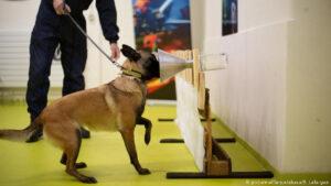 Finlandia utiliza perros para detectar covid en aeropuerto