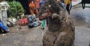 La verdadera historia de la rata gigante en CDMX