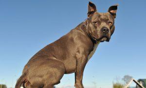 Buscan a persona que recorre calles disparando a perros en Dallas