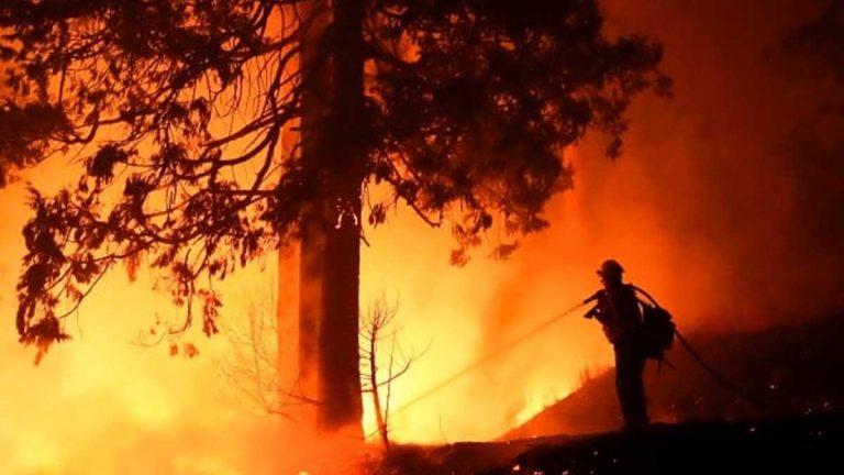 Una festejo causó un terrible incendio forestal