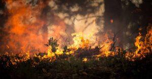 Incendio amenaza cultivos de mariguana; dueños se niegan a irse
