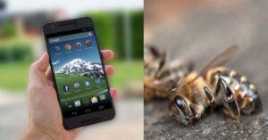 Radiación de celulares puede estar matando insectos: estudio
