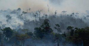 Selva del Amazonas en riesgo de extinción