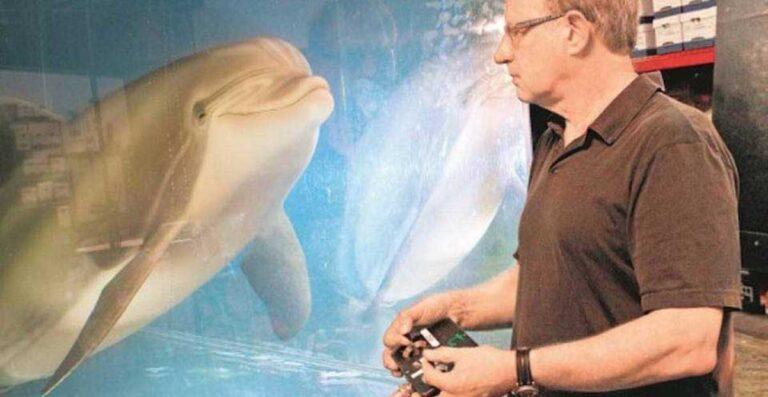 delfines robots parques acuaticos