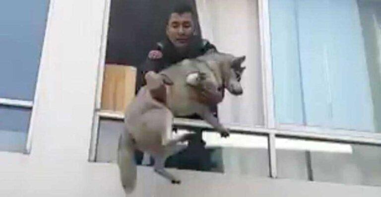 rescatan perro incendio