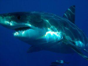 VIDEO: Tiburón ataca a hombre en playa más turística de Miami