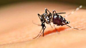 Se quintuplican los casos de dengue en Tamaulipas