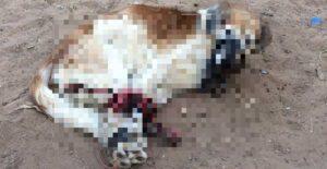 Crueldad animal: hombre tira a perro amordazado
