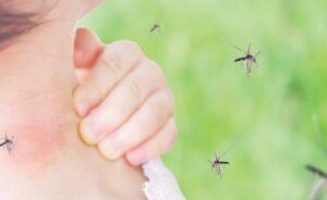 Hospitalizan a 95 por dengue en Nuevo Laredo