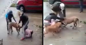 Pitbull ataca ferozmente a niña de 7 años (VIDEO)