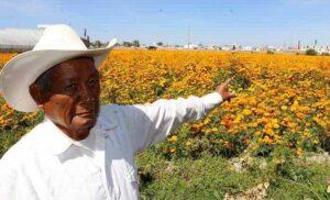 Cierre de panteones da 'golpe mortal' a productores de cempasúchil