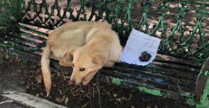 Abandona a perrito en banca porque sufría maltrato