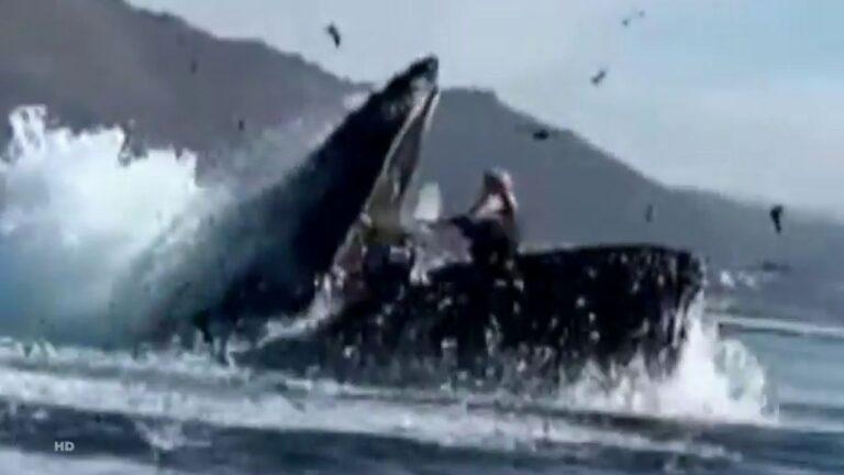 Ballena casi devora a mujeres que paseaban en kayac