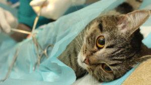 Crueldad en Texas: Disparan a gato; aumentan ataques a mascotas