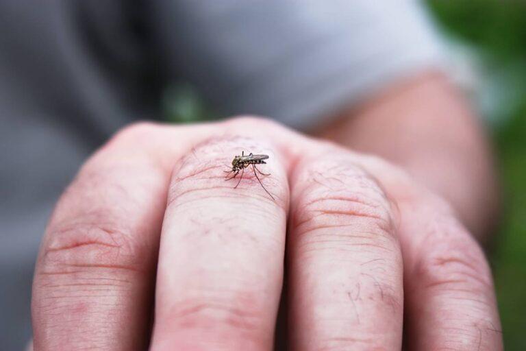 Detectan mosquito con Virus de Nilo Occidental en Texas
