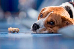 Perros también sienten celos y otras emociones humanas: UNAM