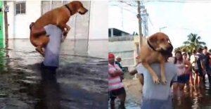 VIDEO: Rescata de inundación en Tabasco a su perro