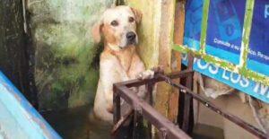 Rescatan a perro a punto de ahogarse en inundaciones de Tabasco