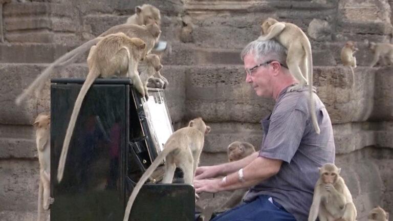 Pianista ofrece peculiar concierto a monos