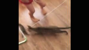 VIRAL: creía que su gato jugaba con conejito, se lleva tremendo susto