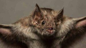 Encuentran parientes del covid en murciélagos congelados en laboratorios