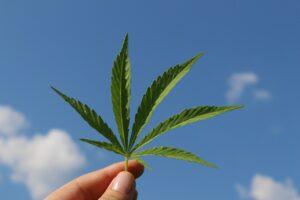 Qué se puede hacer y qué no con la nueva ley sobre mariguana