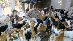 VIDEO Mujer vive con más de 480 gatos que rescató de la calle