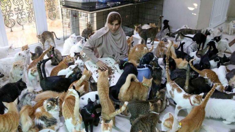 La mujer cuida a 480 gatos y 12 perros
