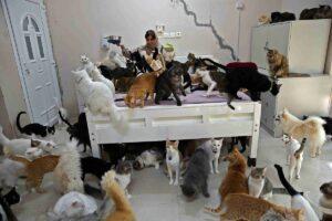 Gatolover adopta a 400 mininos callejeros