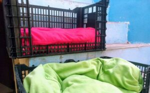 Roban perritos en refugio de Altamira, Tamaulipas