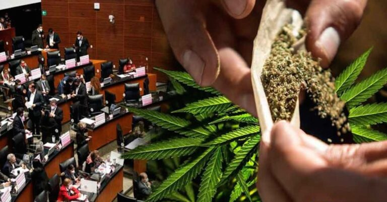 senado aprueba uso de la marihuana