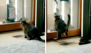 Gato intenta atrapar un pájaro, pero se estrella contra una puerta de vidrio