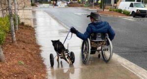 Hombre con discapacidad adopta a perrito en silla de ruedas