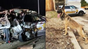 Conductor borracho impacta y mata a agente canino Loki