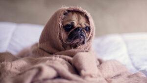 Estos síntomas indican que tu perro está pasando frío