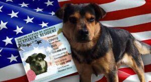 ¡Covito será gringo!: Residente de EEUU lo adopta y se lo llevarán a Laredo, TX